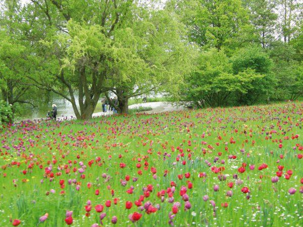 Highlights für Familien und Gartenfreunde bietet der Britzer Garten  © Manu Lizenz: