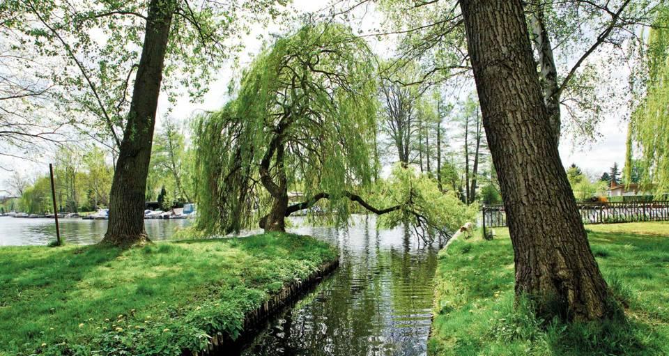 Baumgartenufer Umgebung