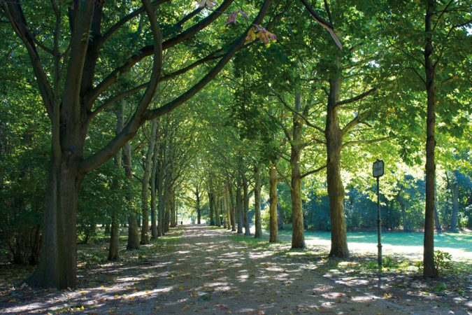 Tiergarten • Grüne Oase in Berlin-Mitte. Foto: Katherine Price Lizenz: CC BY 2.0