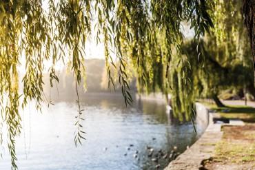 Ziegert-No1-Uferansicht