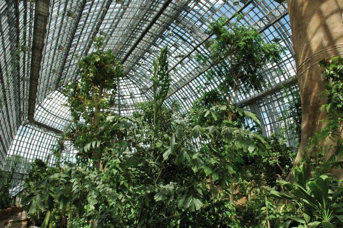 Großes Tropenhaus, Innenansicht © I. Haas, Botanischer Garten und Botanisches Museum Berlin