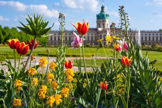 Blumenbeet vor dem Schloss Charlottenburg © Ziegert EverEstate GmbH