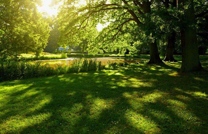 Naturnah in Charlottenburg © Ziegert EverEstate GmbH
