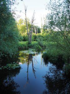 Waidmannsluster-Kiez_Spiegelnde_Landschaft_im_Tegeler_Fliess_Naturschutzgebiet_Berlin-225x300 Zuhause im Waidmannsluster Kiez