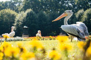 Ausflugsziel Tierpark Berlin © PROJECT Immobilien Wohnen AG