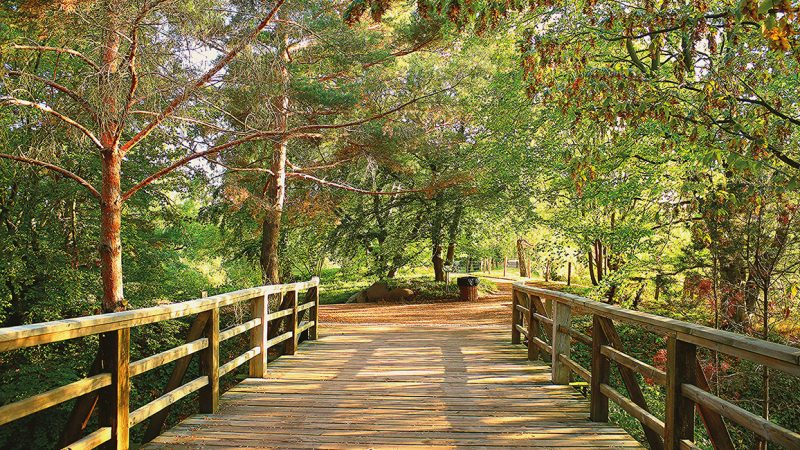Britzer Garten © WhisperingJane_ASMR / Pixabay.com