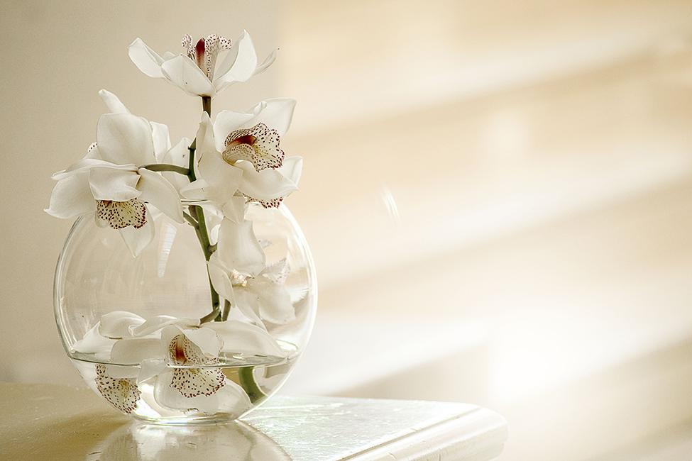 Orchidee © Maja Cvetojević / pixabay.com