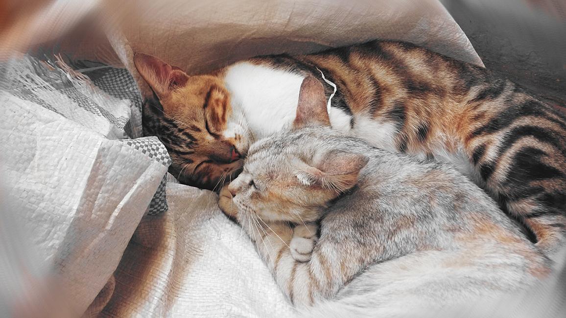ein Zuhause für Mensch und Tier © mrs. pandora / pixabay.com